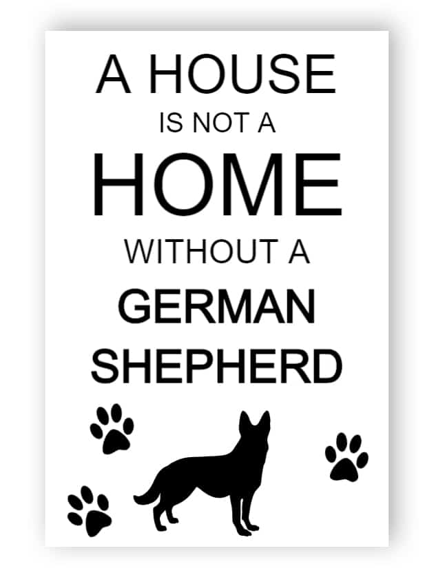 House is not a home without a German shepherd